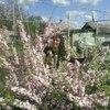 Ирина, 57, г.Харьков
