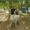 Андрей, 29, г.Йошкар-Ола