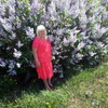 Светлана, 65, г.Добруш