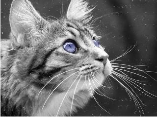 Чем полезны кошки и коты?