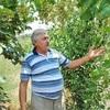 rafik, 60, Ağstafa