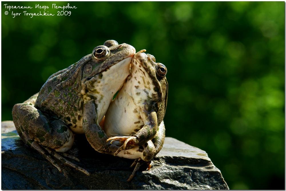 интернет-магазин картинки поцеловала жабу бобовые