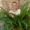 галина, 53, г.Льгов