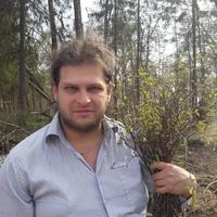 МихаилЛесной, 36 лет, Дева, Высоковск
