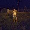 Мария, 26, г.Ростов-на-Дону